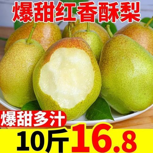 现摘现发红香酥梨10斤单果当季水果脆甜整箱非库尔勒香梨青雪梨5