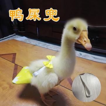 鸭屎兜专用柯尔宠物小鸡鹅神器防乱拉接屎尿鸭子鸭鸭
