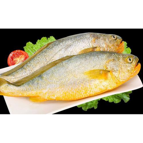 黄花鱼海鲜水产大黄花鱼新鲜冷冻鲜活整箱东海海捕小