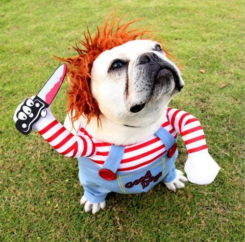搞怪抖音网咪狗狗衣服宠物万圣节致命娃娃拿刀站立变身装搞笑