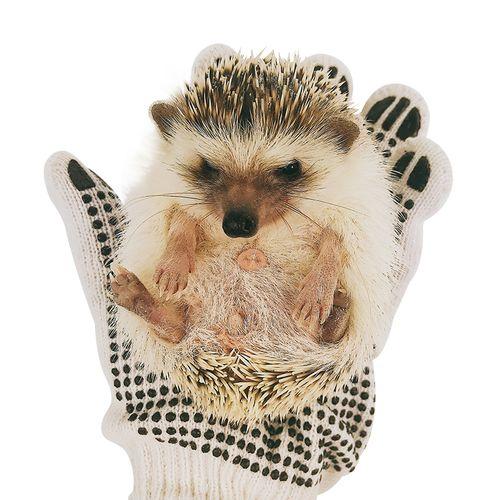 防仓鼠咬手套小宠物刺猬小金丝熊荷兰猪防咬用品防咬伤可.