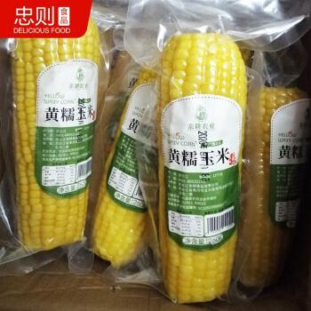 亲耕黄糯玉米东北新鲜农家香糯小玉米真空香甜黏糯玉米棒饱腹代餐