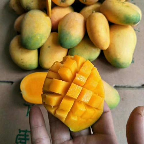 海南小台农芒果10斤新鲜小台芒当季水果整箱包邮应季