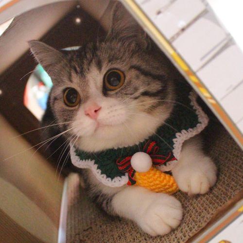 猫咪围脖防舔百搭装饰宠物饰品围兜卡通可爱萌ins餐巾
