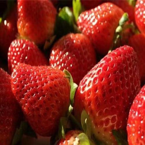 四季草莓苗盆栽绿植物种子苗水果树苗子批发南北方室内外盆栽种植 女