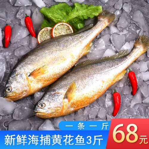 黄花鱼新鲜深海海捕大黄花鱼3条鲜活冷冻生鲜黄鱼海鲜