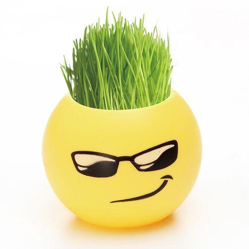 创意迷你植物可爱盆栽草娃娃防辐射桌面diy绿植包邮qq表情趣味